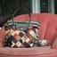 กระเป๋าสะพายงานแบรนด์ดังรุ่นยอดฮิต เนื้อผ้าหนาตัดเย็บอย่างดี thumbnail 3