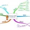 สอนลูกให้รู้จัก Mindmap เพื่อให้คิดอย่างเป็นระบบ by แม่สายป่าน