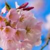 น้ำหอม Floral | กลิ่นดอกไม้ น่ารักๆ