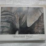 จิีกซอว์ 500 ชิ้น Elephant Face