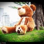 ตุ๊กตาหมี ใส่หมวก Size XXL จัมโบ้