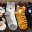 [Preorder] เซ็ทถุงเท้าแมว 4 คู่ thumbnail 4