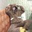 [พร้อมส่ง] ชุดนอนเสื้อขนสัตว์มีฮูดหมี+กางเกง มีสีน้ำตาล/ครีม thumbnail 4