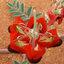 Swainsonia สเวนโซเนีย thumbnail 2