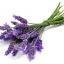 Lavender ลาเวนเดอร์ thumbnail 1