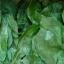 ใบทุเรียนเทศแห้ง สำหรับต้มเป็นชา 100 กรัม (Air Dried Soursop Leaves 100 Grams ) thumbnail 4