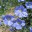 Flax แฟล็ก thumbnail 3