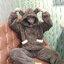 [พร้อมส่ง] ชุดนอนเสื้อขนสัตว์มีฮูดหมี+กางเกง มีสีน้ำตาล/ครีม thumbnail 8