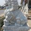 สิงโตปักกิ่ง ขนาด สูง 200 เซนติเมตร